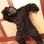 обезьяна танец фото видео самсунг 010
