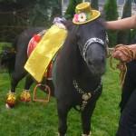 Прогулки конные цена
